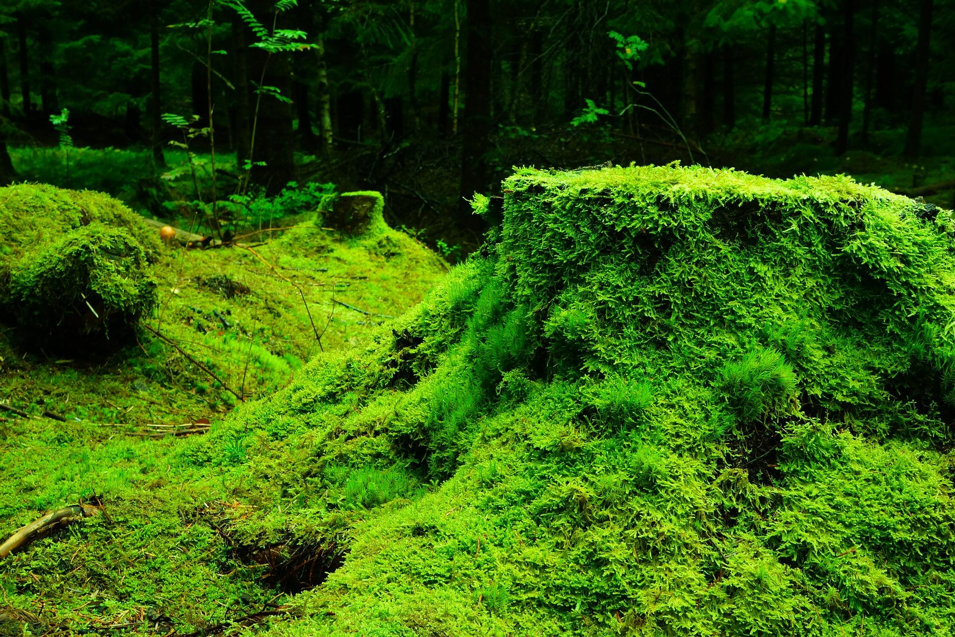 それって!? 実際どうなの課? おばたのお兄さんが5000円の苔石を発見?